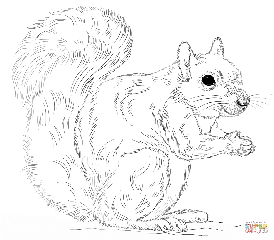 934x818 Eastern Gray Squirrel Coloring Page Free Printable Coloring Pages
