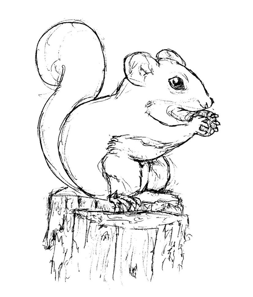 line drawing squirrel at getdrawings com free for personal use