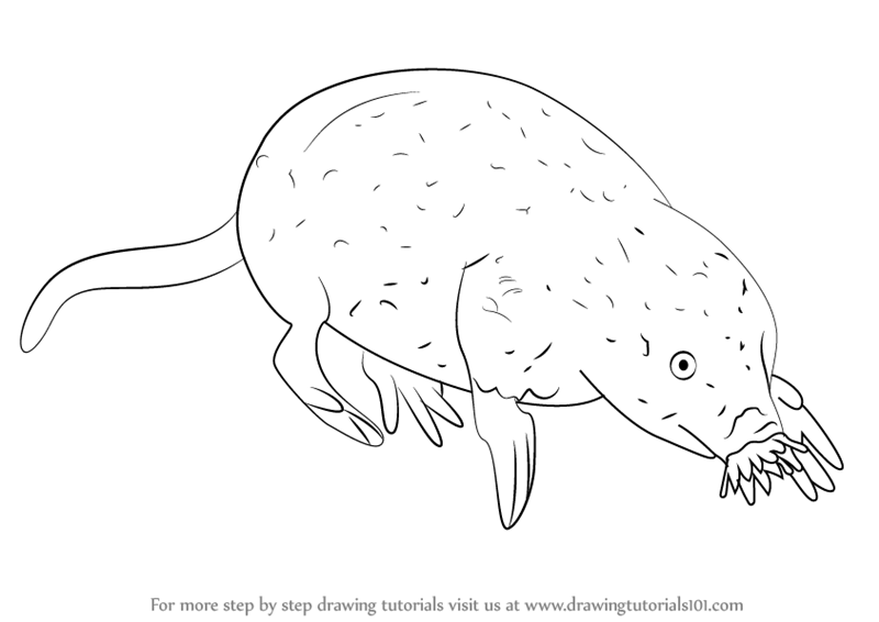 800x566 Learn How To Draw A Star Nosed Mole (Other Animals) Step By Step