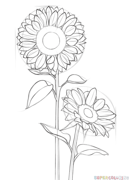 413x575 How To Draw A Sunflower Step By Step Drawing Tutorials