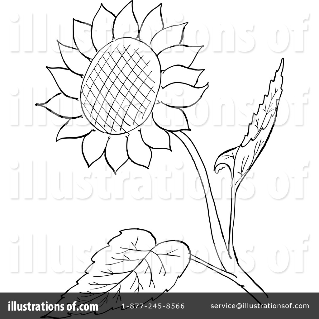 1024x1024 Outline Drawing Of A Sunflower Sunflower Outline