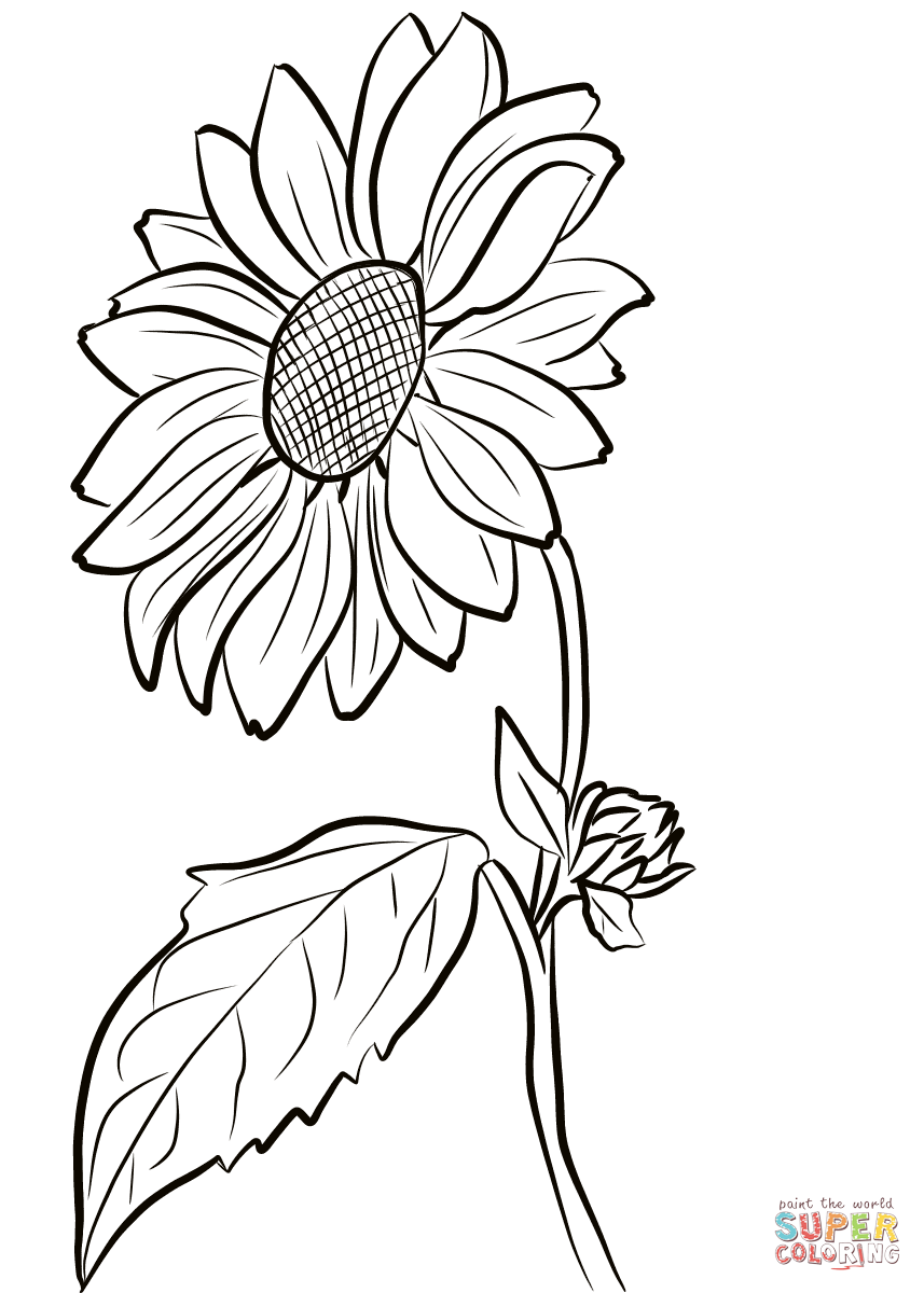 Line Drawing Sunflower on Thanksgiving Coloring Pages To Print