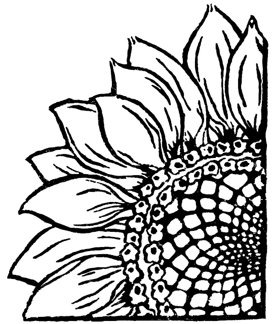 537x640 Woodle Doo Sunflower Linocut. An Excellent Lino Printing Block