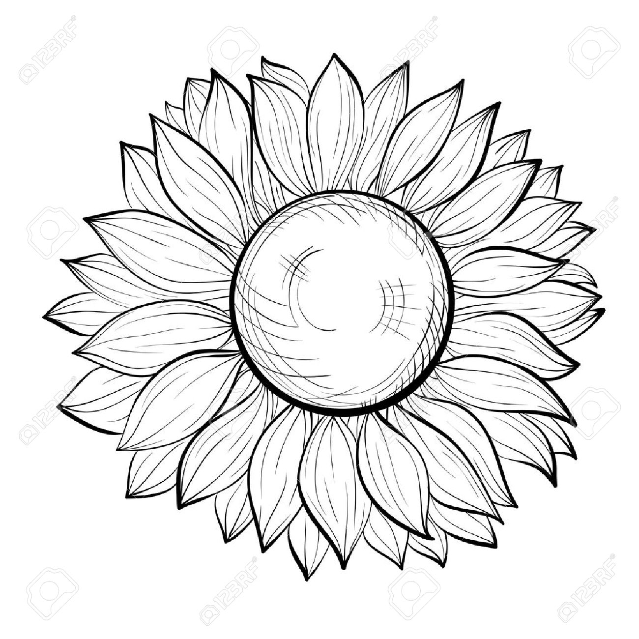 1300x1300 Beautiful Black And White Sunflower Isolated On White Background