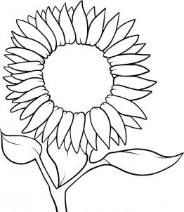 262x302 How To Draw A Sunflower Step 6 Drawing Sunflowers