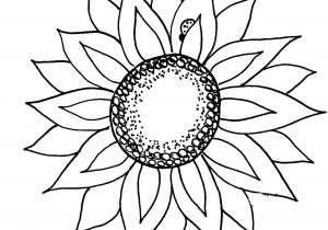 300x210 Black And White Sunflower Drawing Simple Sunflower Drawing 1000