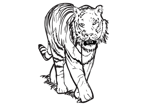600x450 How To Draw A Tiger Sketchbook Challenge 29