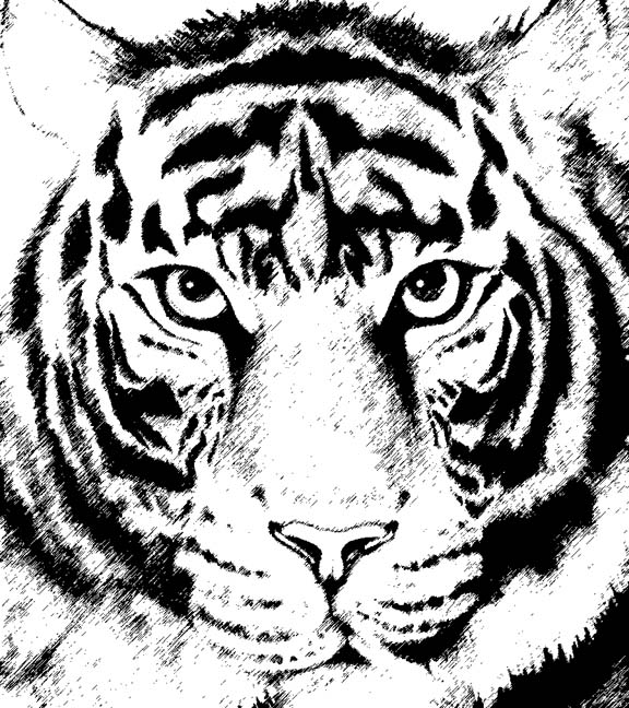 576x648 Tiger Drawings Are Easy To Draw Using Simple Basic Shapes
