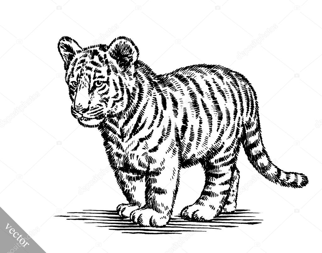 1024x805 Engrave Ink Draw Tiger Illustration Stock Vector Turaevgeniy