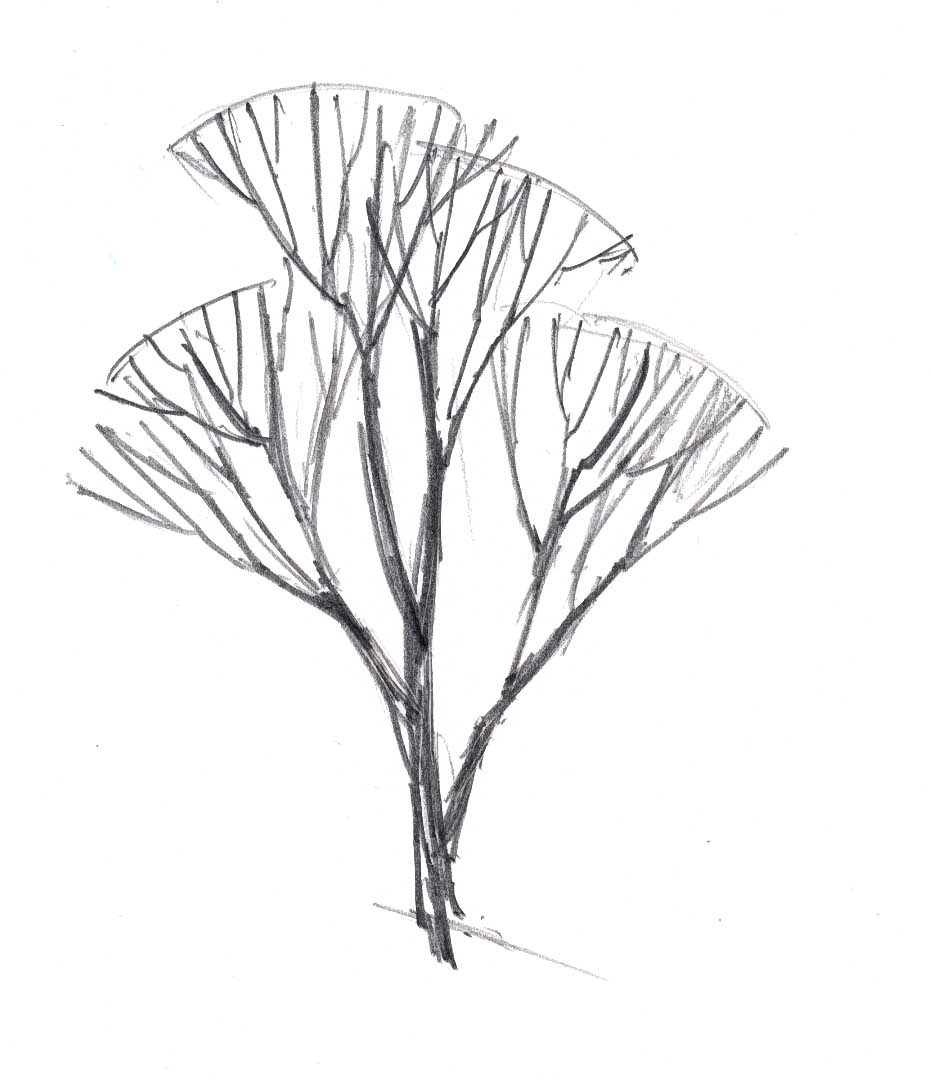 931x1080 How To Draw Trees In Winter