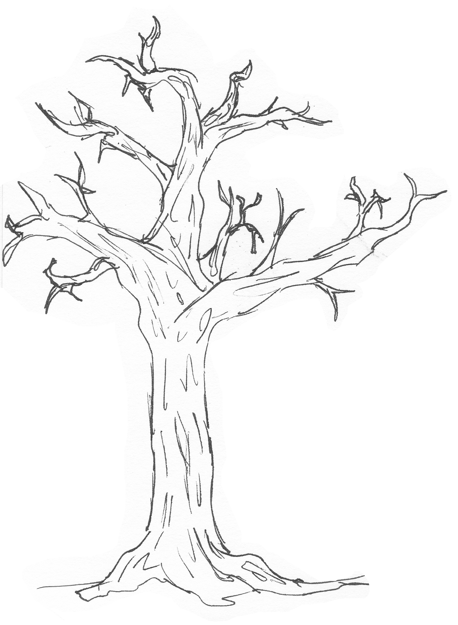 1521x2073 Simple Drawing Of A Tree