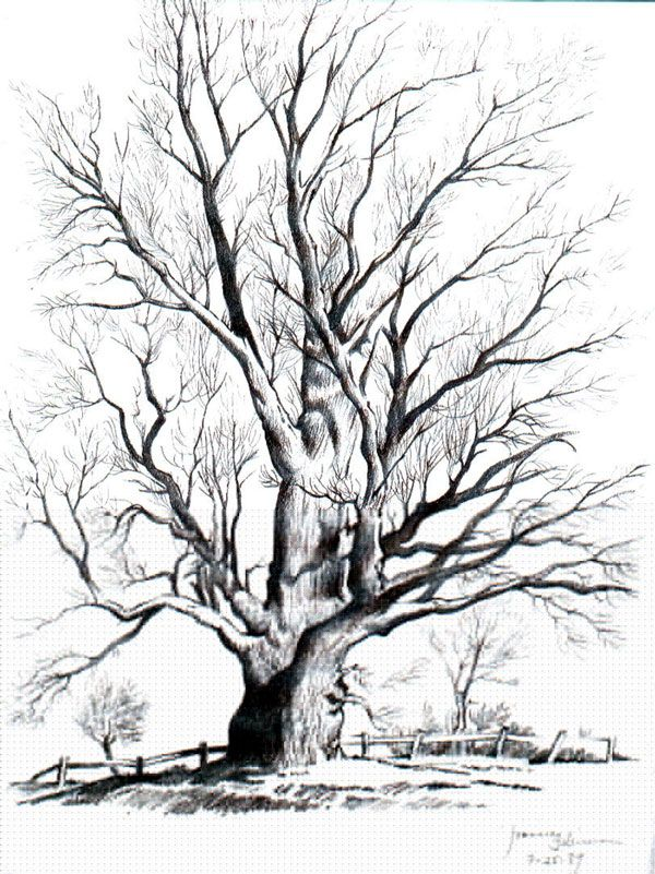 600x801 Tree Drawings Black And White Collection