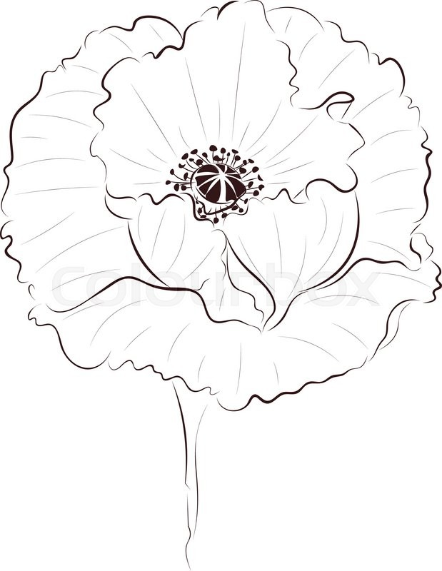619x800 Hand Drawing Poppy Flower, Simple Line Art Illustration. Stock