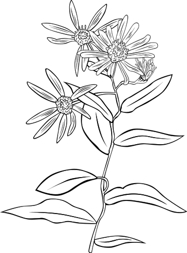 370x500 5590 Flower Line Drawing Clip Art Free Public Domain Vectors