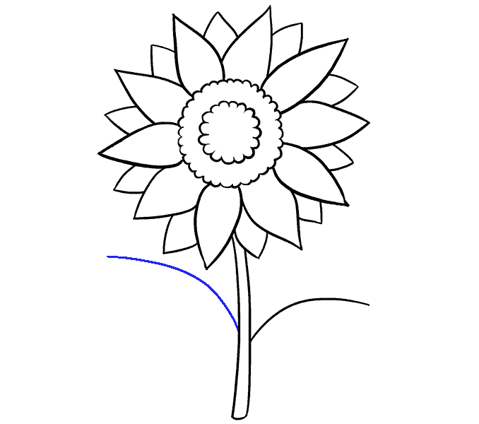 678x600 How To Draw A Sunflower Easy Step By Step Drawing Guides
