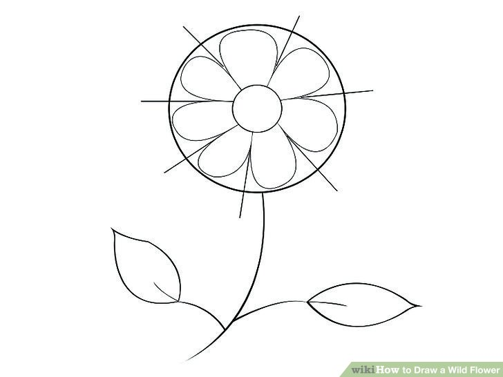 728x546 How To Draw A Wild Flower 7 Steps (With Pictures)