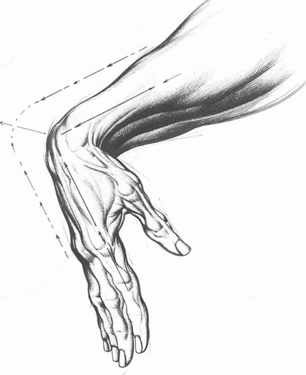 980x1202 Hand Palm Drawing