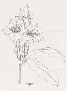 236x317 Floral Illustration With Penpencil I Would Add Some Poppies Then