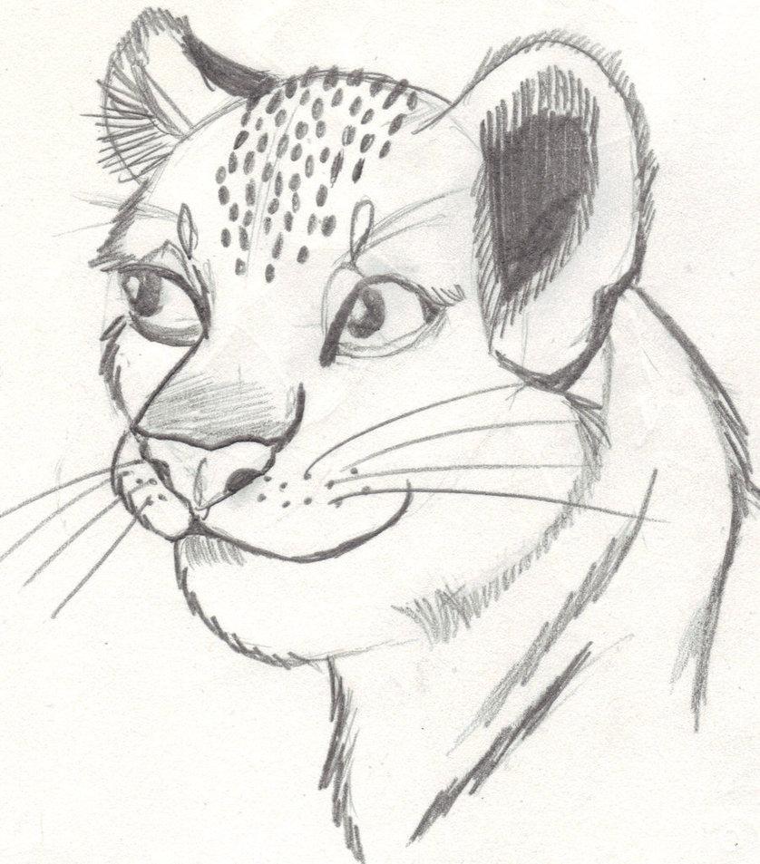 838x953 Lion Cub Sketch By Fapingmulan