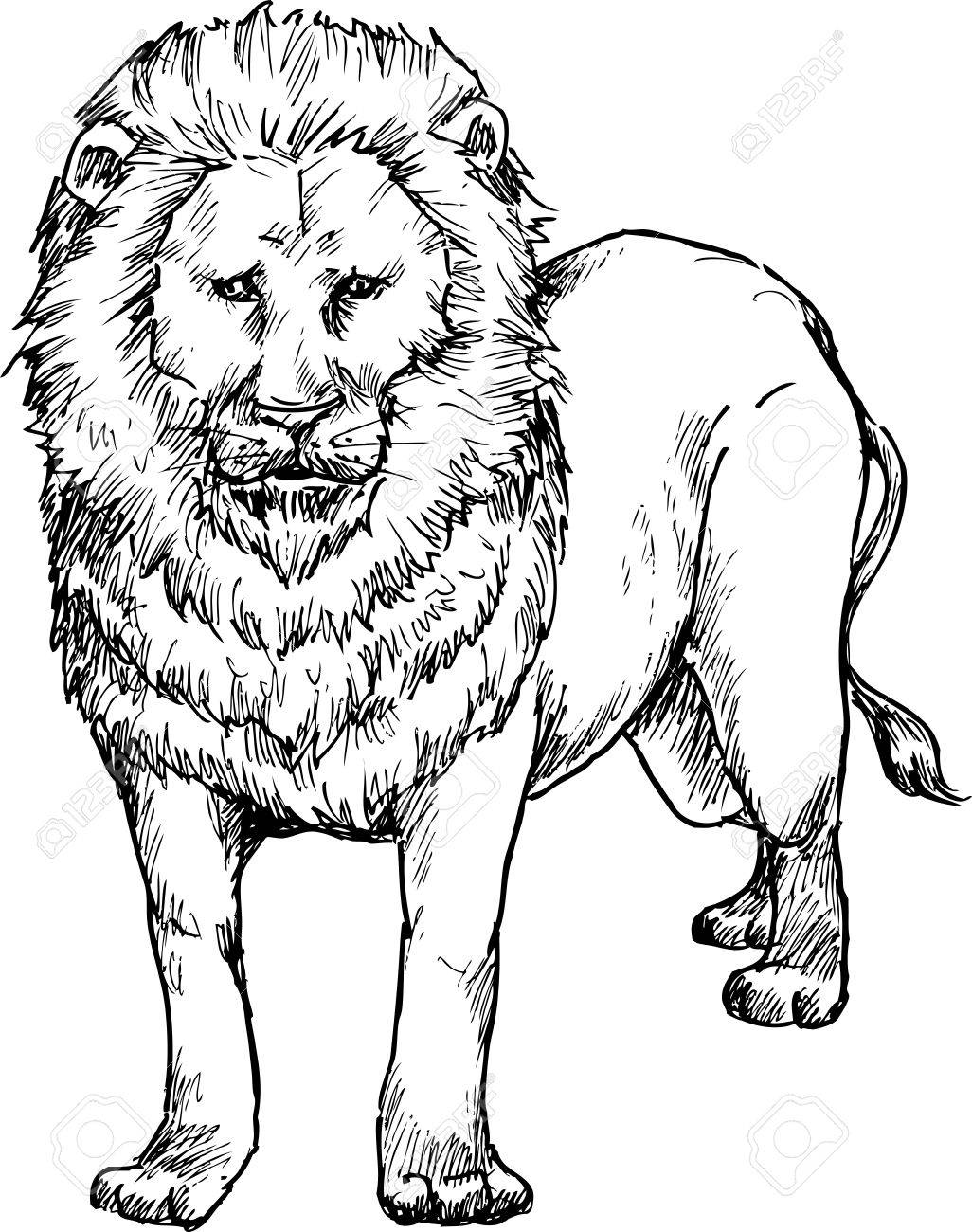 1026x1300 Hand Drawn Lion Royalty Free Cliparts, Vectors, And Stock