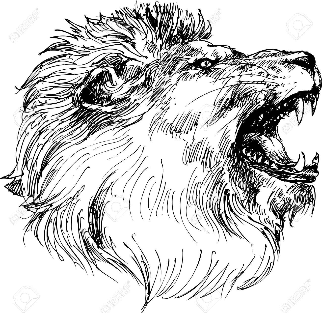 1300x1263 Lion Head Hand Drawn Royalty Free Cliparts, Vectors, And Stock