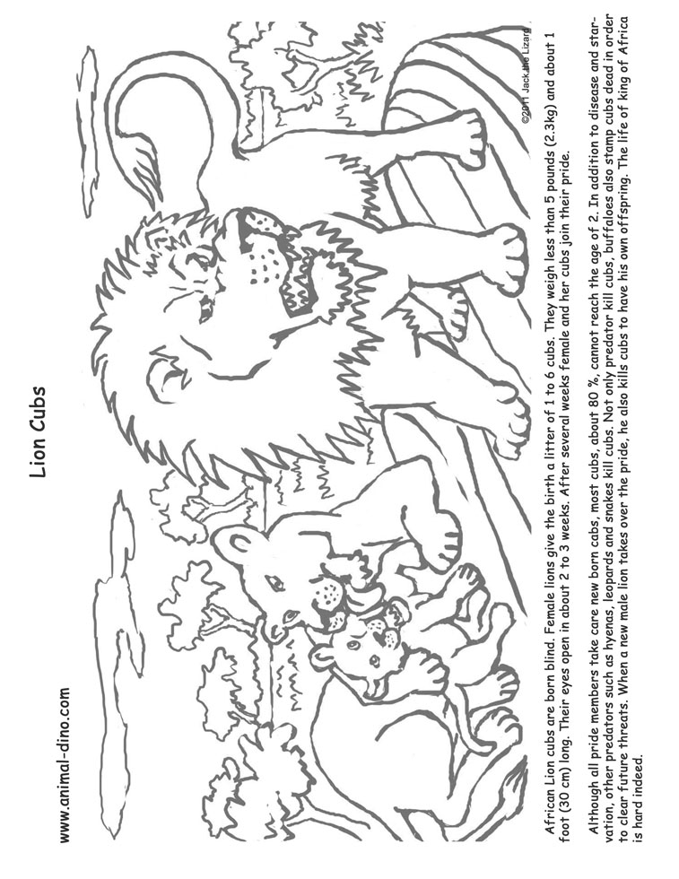 757x980 Animal Coloring Page (Lion Cubs) Print Size