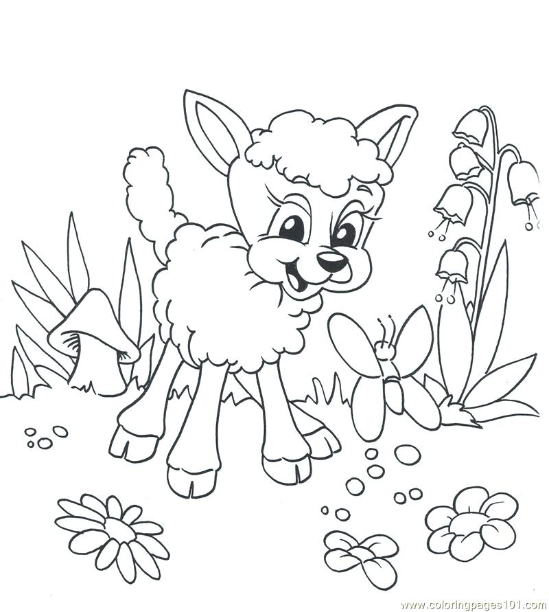 800x891 Lion Lamb Coloring Page Free Printable Pages