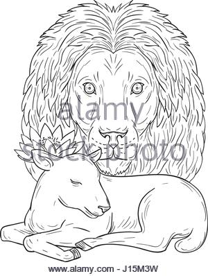 300x398 Lion Watching Over Sleeping Lamb Drawing Stock Photo, Royalty Free