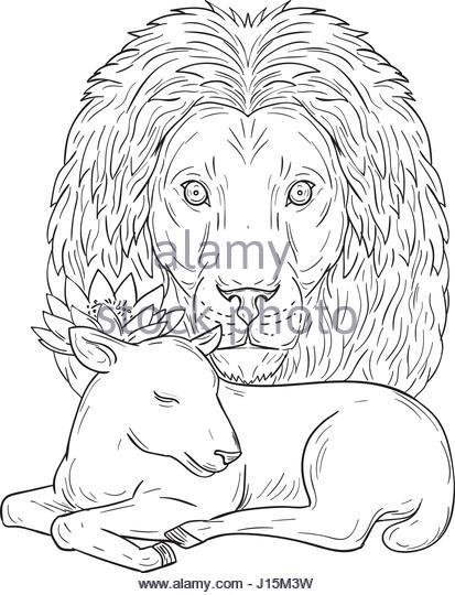 413x540 Mane Sheep Stock Photos Amp Mane Sheep Stock Images