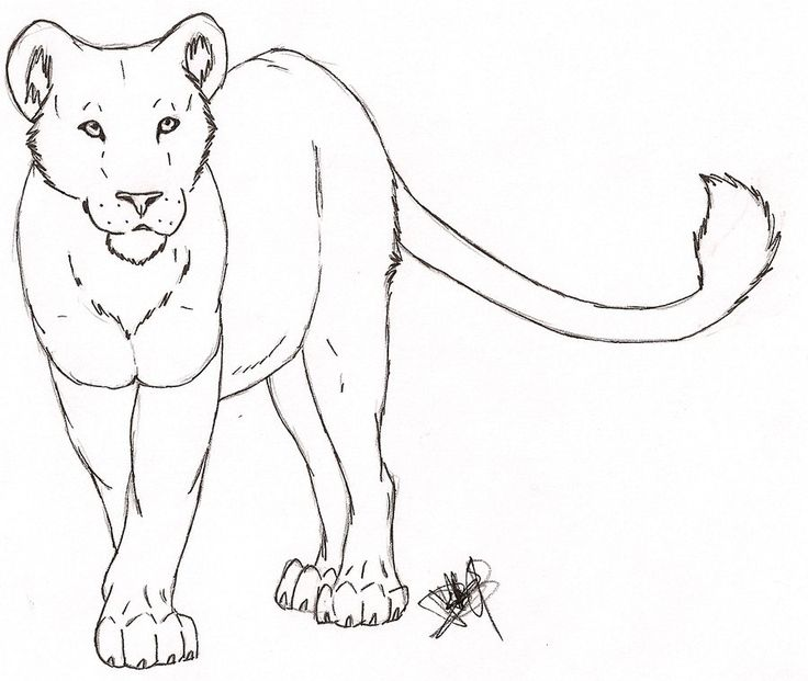 Lion And Lioness Drawing