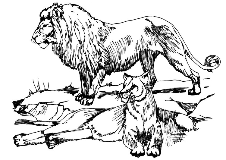 750x531 Coloring Page Lion And Lioness