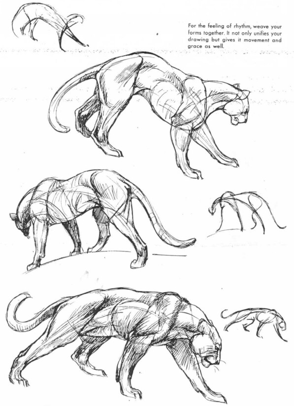 597x825 Lioness Character Design Reference Drawings