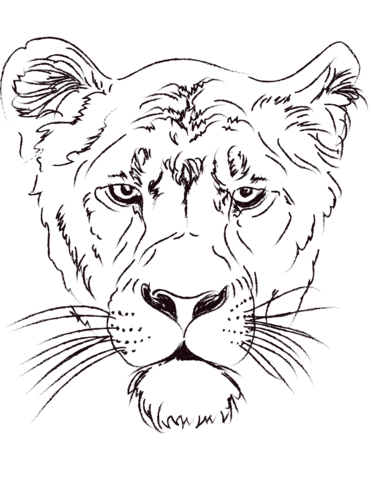 371x480 Lioness Head Coloring Page Free Printable Coloring Pages