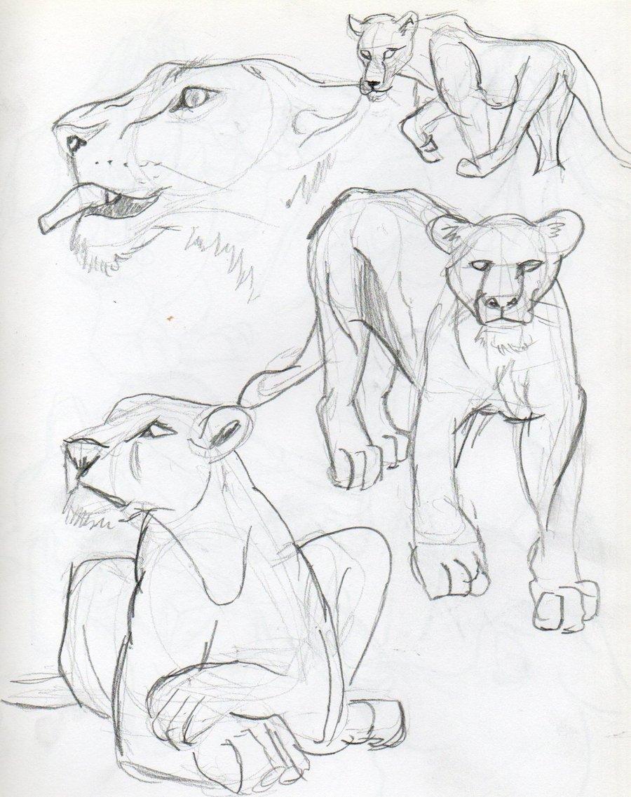 900x1137 Lioness Study 10 By Samoht Lion