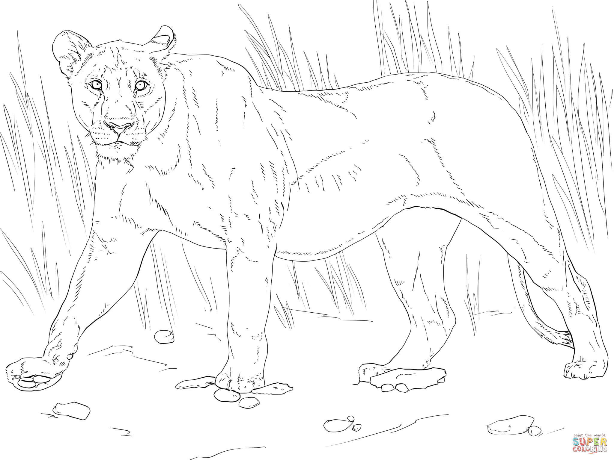 2048x1536 Walking Lioness Coloring Page Free Printable Pages