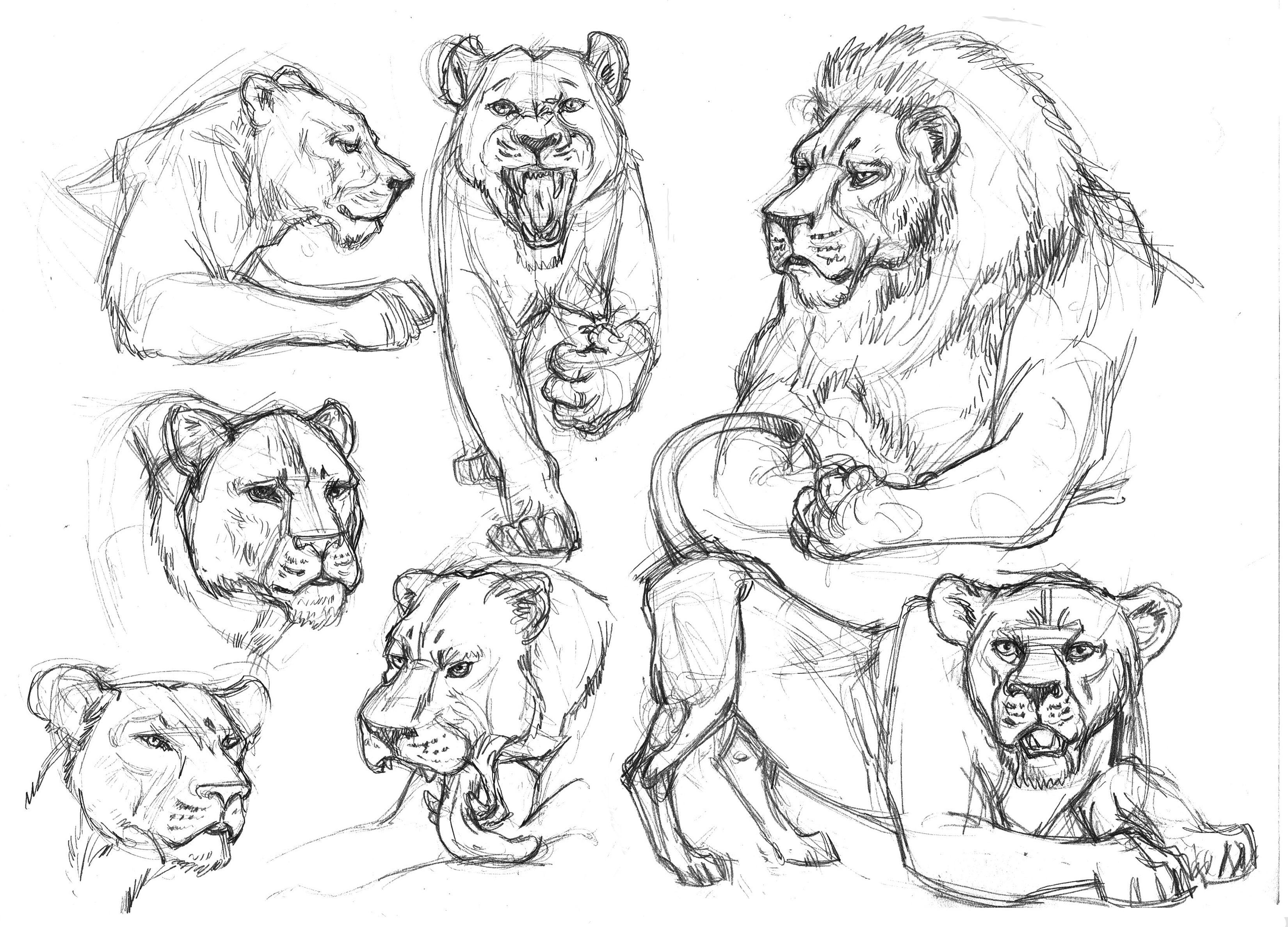 3300x2376 Garygeraths Animal Drawing