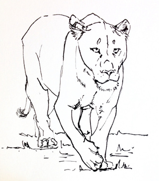 320x364 Lioness Drawings On Paigeeworld. Pictures Of Lioness