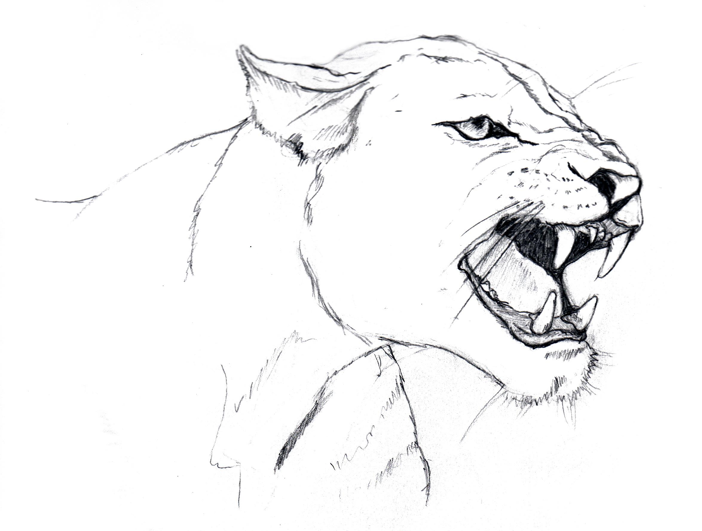 2349x1779 Lioness
