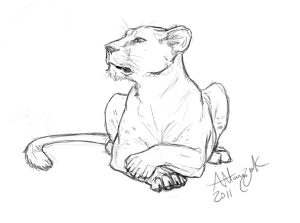 607x451 Attentive Lioness By Marcynuk On Lion And Lioness