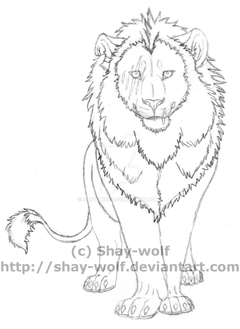 763x1048 Lion Sketch By Shay Wolf