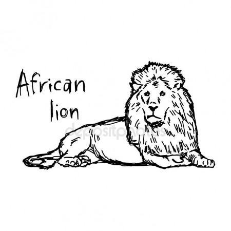 450x450 African Lion Lying