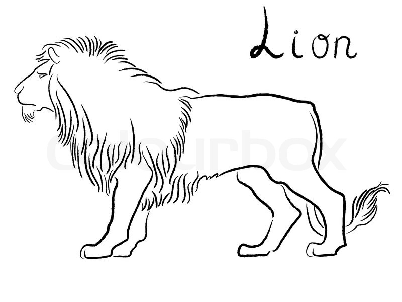 800x600 Black Graceful Lion Contour Isolated Over White. Hand Drawing