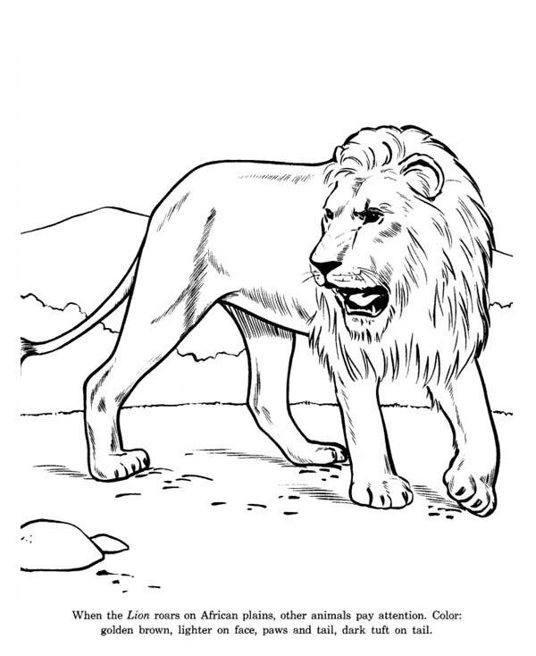 600x734 African Lion Coloring Page Color Luna