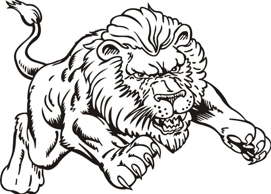 Lion Color Drawing At Getdrawings Com Free For Personal Use Lion