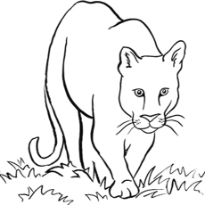 image regarding Free Printable Lion Coloring Pages named Lion Coloration Drawing at  No cost for person