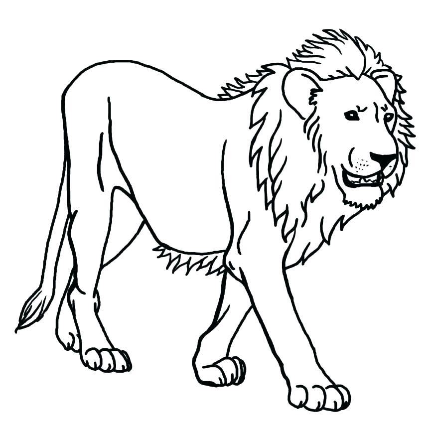 863x863 Coloring Pages Draw A Lion For Kids Affan