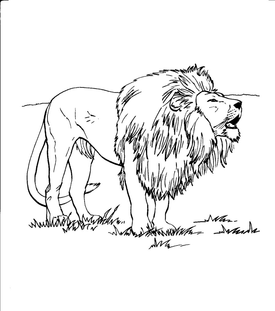 900x1020 Free Printable Lion Coloring Pages For Kids