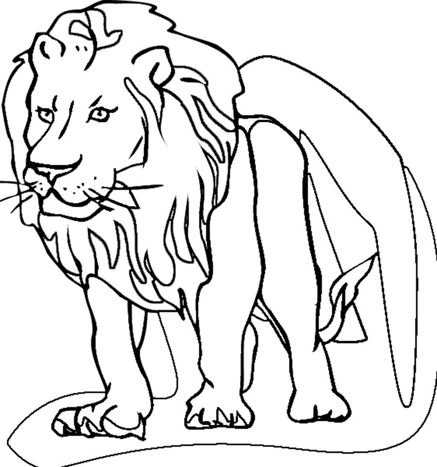 900x961 Lion
