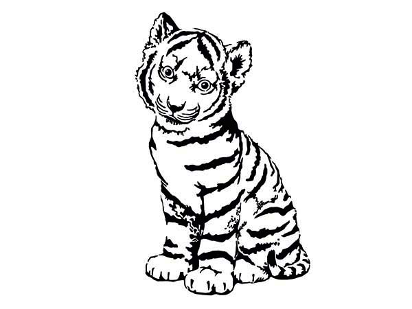 600x450 A Cute Tiger Cub In Front Of Camera Coloring Page