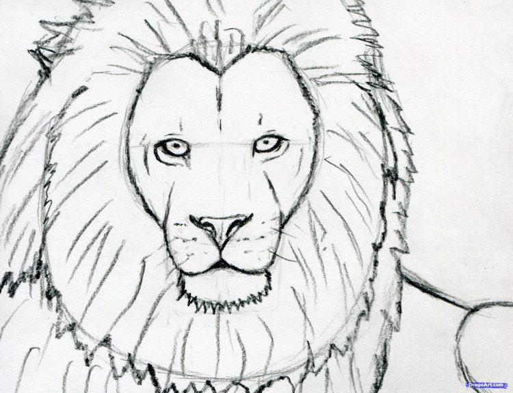750x575 Coloring How To Draw An Angry Lion Face Plus How To Draw A Lion